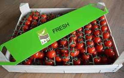 Tomatoes resmi